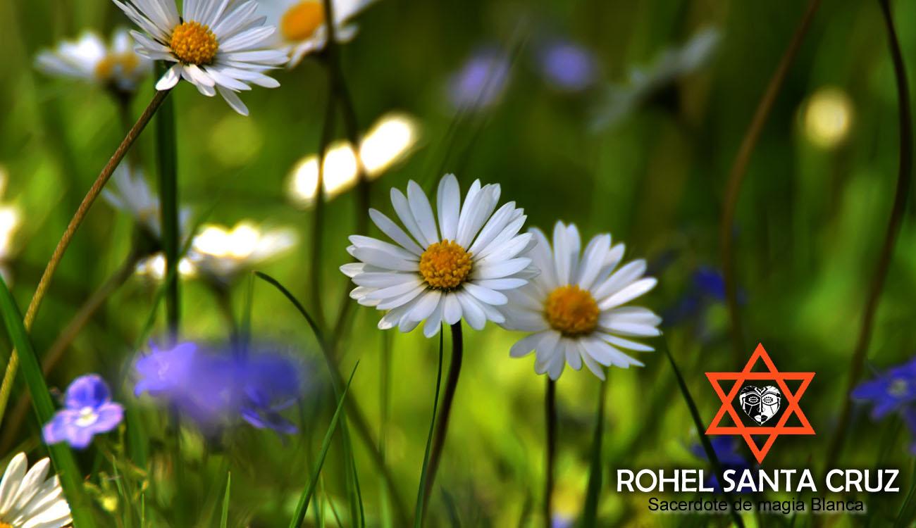 amarres de amor con plantas