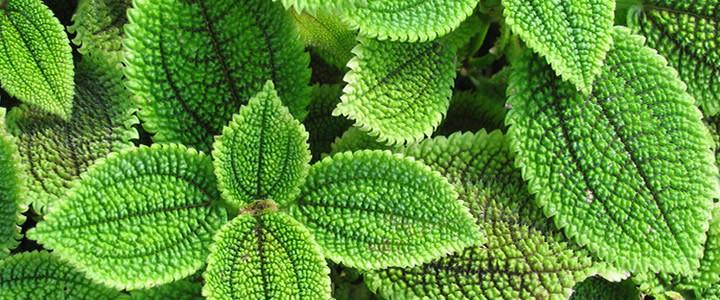 plantas para el amor